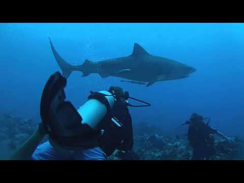 Shark Valley Tahiti 2015