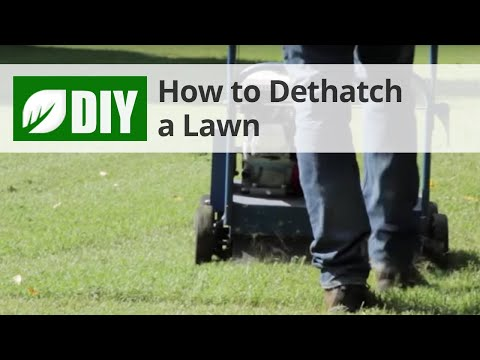 How To Dethatch A Lawn Dethatching Tips Youtube