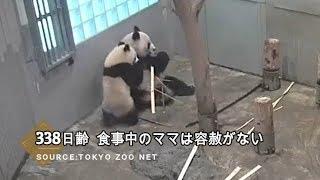 ☆ Cute Panda ☆ #15 シャンシャン ママの食事を邪魔して・・・