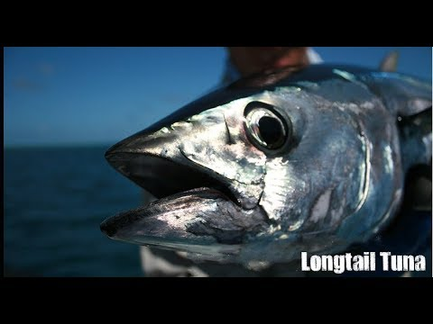 Anglers UAE slow jigging trip, Ahmed landed Amber Jack