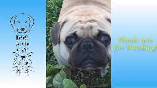 Try Not To Laugh Challenge  Funny Cat & Dog Vines compilation 2021 !!
