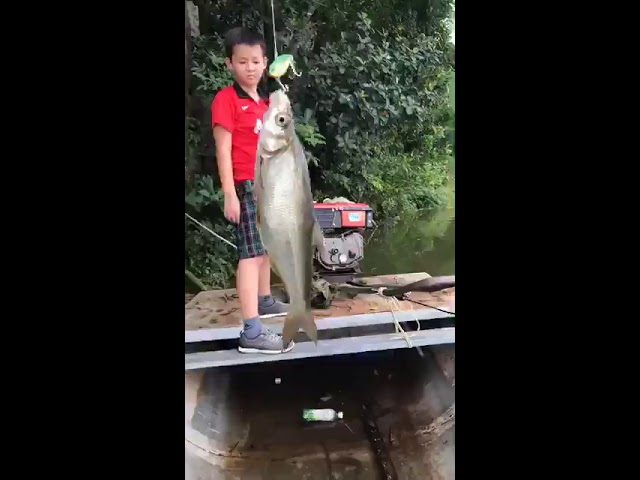 Livestream trực tiếp câu cá bằng mồi giả, cần siêu mềm bắt cá thiểu ầm ầm