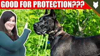 ARE GREAT DANE GOOD GUARD DOGS?