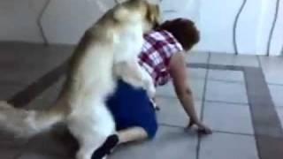 Dog Loves Grandma - VideoBash.com.mp4