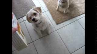 They love Milk-Bone Dog Biscuits