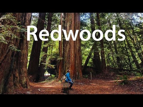 A Ramble Through Redwood National Park - Gopro / Feiyu - June 2016