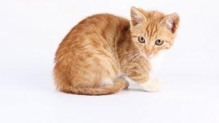 Игра Кошки Мышки. Реальное Видео - 1