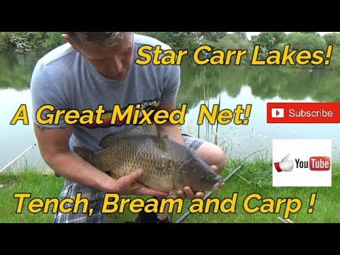 Tench, Carp And Skimmers Fishing At Star Carr Lakes