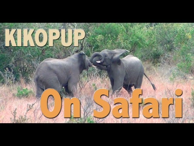 Kikopup On Safari - Clicker dog training