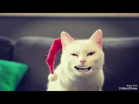 Singing Cat speed up Jingle bells