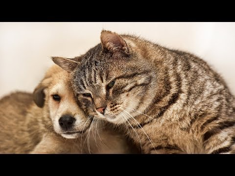 Cats Meeting Puppies for the First Time Compilation Part 2