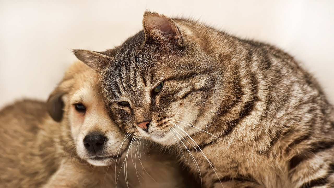 when cats and dogs first meet