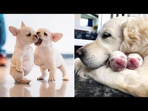 AWW CUTE BABY ANIMALS Videos Compilation cutest moment of the animals - Soo Cute! #45