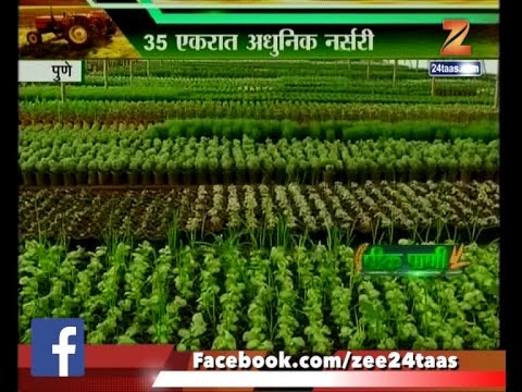 Kpani Pune Flower And Plants Morden Nursery