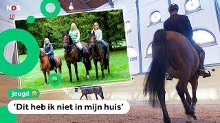 Zo zien de stallen en paarden van koning Willem-Alexander eruit