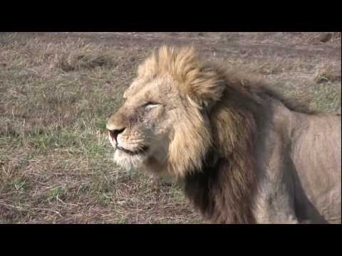 Zambia: Leopards & Lions