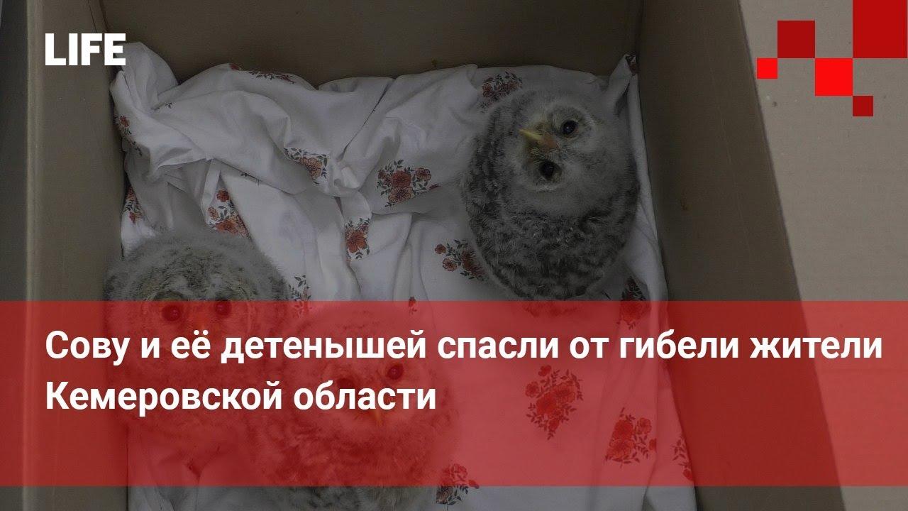 Сову и её детенышей спасли от гибели жители Кемеровской области