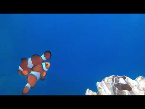 Advanced Aquarium Consultancy
