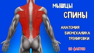 видео Мышцы шеи анатомия, функции их у человека