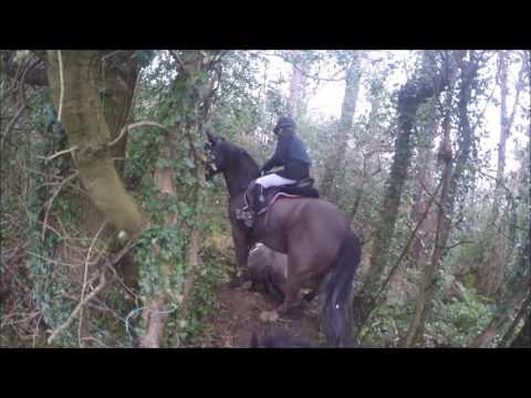 The Bray Harriers Bel Air Hunt Season End 11th March 2017