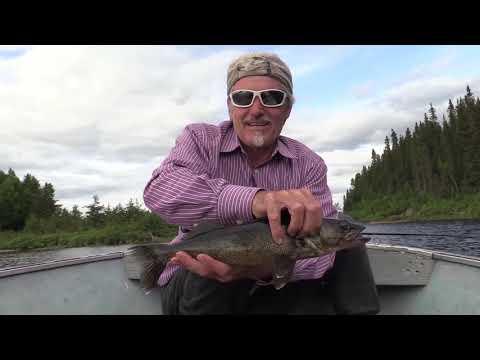 Pêche au doré Pourvoirie lac Suzie