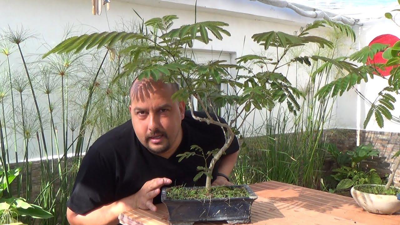 C mo hacer bonsai de hoja compuesta youtube for Bonsai vendo