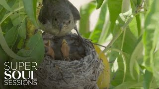 Baby Birds Nesting | SuperSoul Sessions | Oprah Winfrey Network