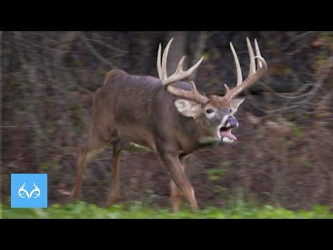 GIANT Illinois Buck in Rut | Hunt with Gregg Ritz | Monster Bucks Mondays Presented by Midway USA