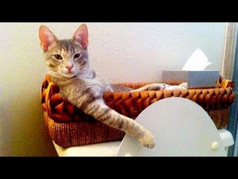 THE BEST ANIMALS Compilation  -  Simply can't STOP LAUGHING