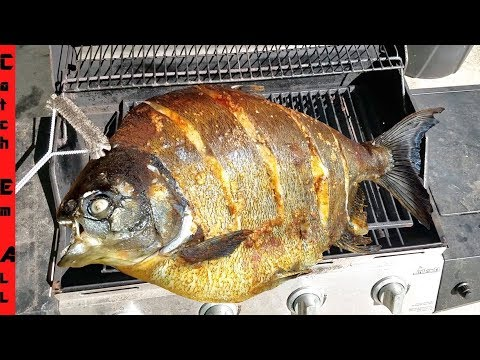 GIANT RIVER PIRANHA CATCH And COOK!