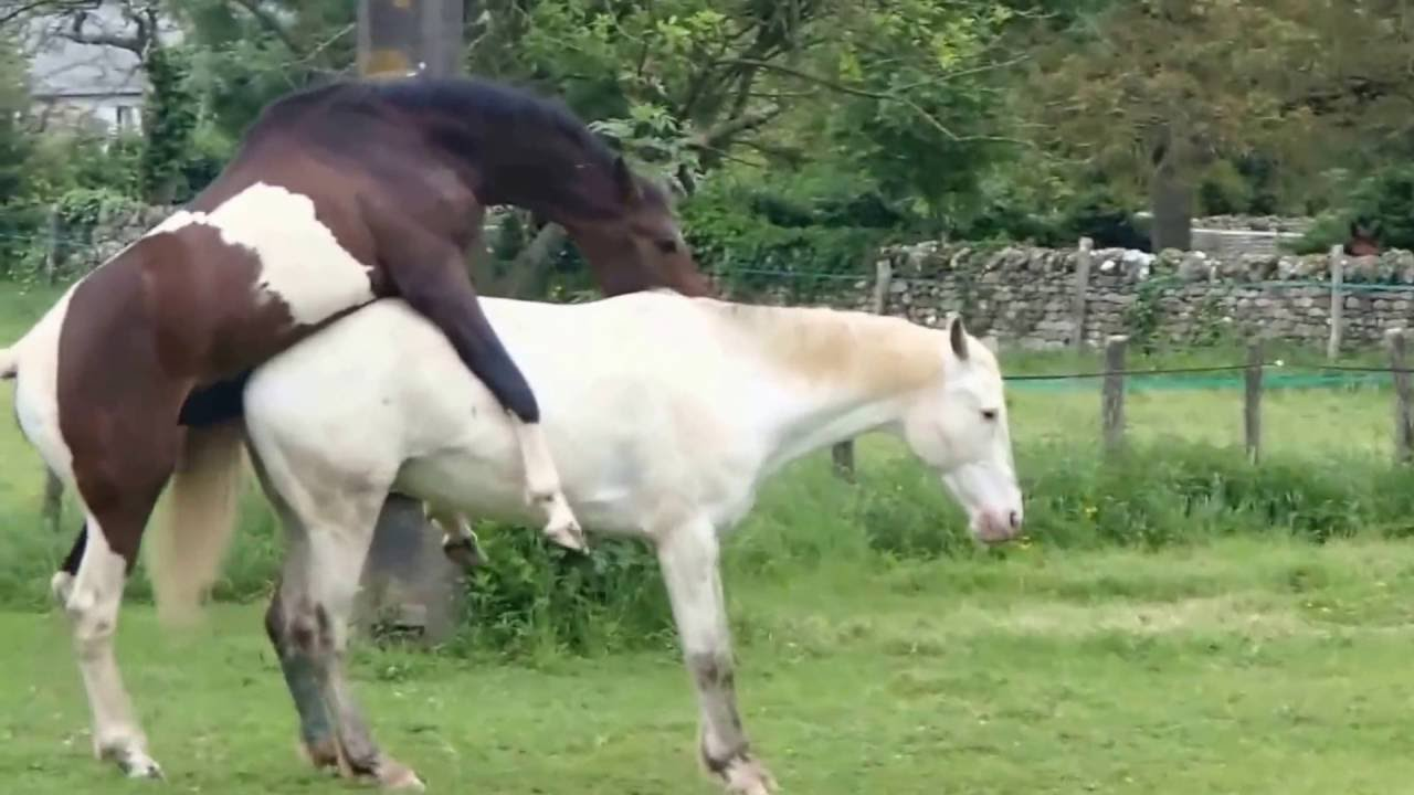 Horse mating with humans for real