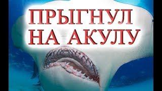 Турист прыгнул в море  убил акулу,El turista saltó en el mar mató a un tiburón