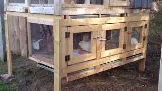Canadian Rabbit Hutch Renovation - Part Two