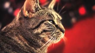Collective Soul Cat thumbnail
