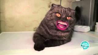 Кот с губами