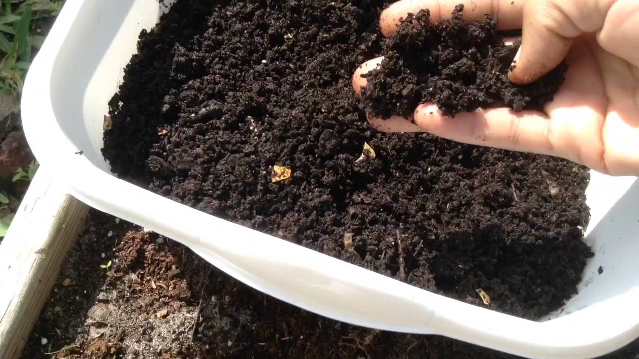 Fertilizing Vegetable Garden Organically with Worm Castings YouTube