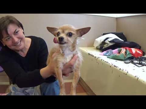 Please Help Save Teddy! Sweet Little Shelter Dog 10 yr. ASAP!