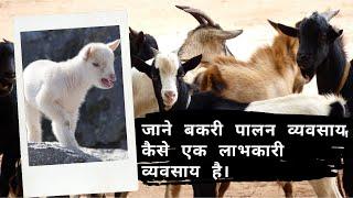 जाने बकरी पालन व्यवसाय कैसे एक लाभकारी व्यवसाय है। - Goat Rearing in Rajasthan