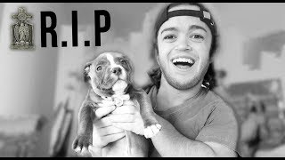 RIP Aria (Evan's Dog)
