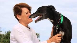 Kirra The Greatest Greyhound