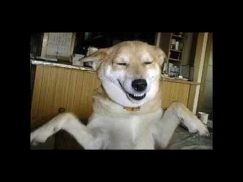 HAPPY DOG, A Pork Air Global Film Studio Presentation