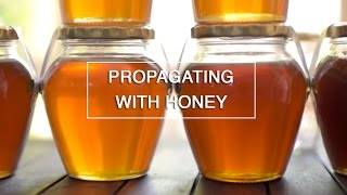 DIY - Use Honey to Root your Plant Cuttings - Green Renaissance thumbnail