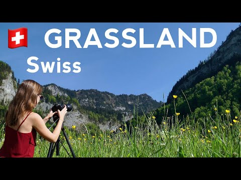 Study-Sound: lawn grassland hayfield | COWBELL | 4 hours Swiss nature