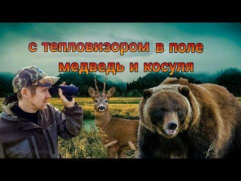 С тепловизором в поле - медведь и косуля.