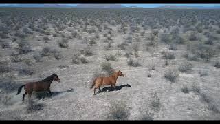 Caballos salvajes / wild horses