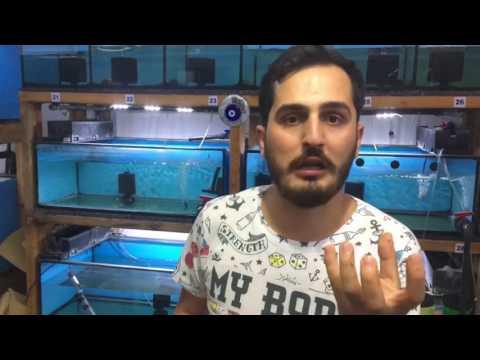 Akvaryum Balıklarına Kabuksuz Artemia Nasıl Verilmelidir ?