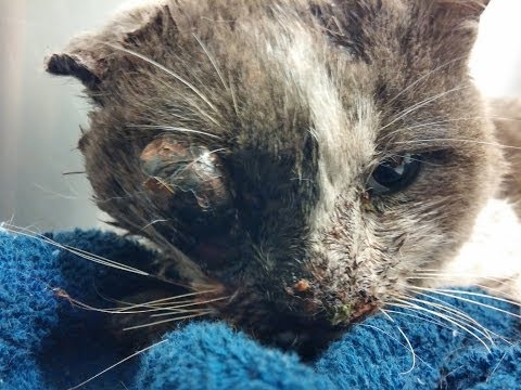 Children beat a stray cat to death-Justice for Quattro