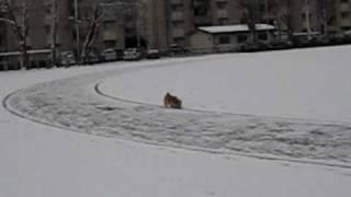 ノーリッチテリアのあたまるが初めて雪の中で散歩しました。