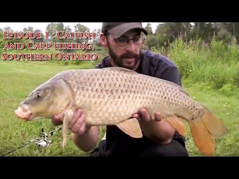 Episode 1 : Catfish and Carp fishing, Southern Ontario