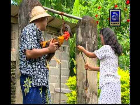 Ketut Bimbo - Ngabut Keladi, Ayam Jago dari Bali (Rooster)